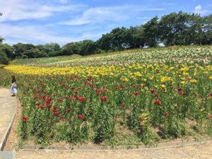 静岡の可睡ゆりの園