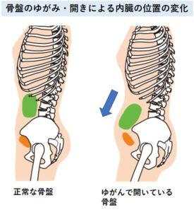 骨盤開く内臓